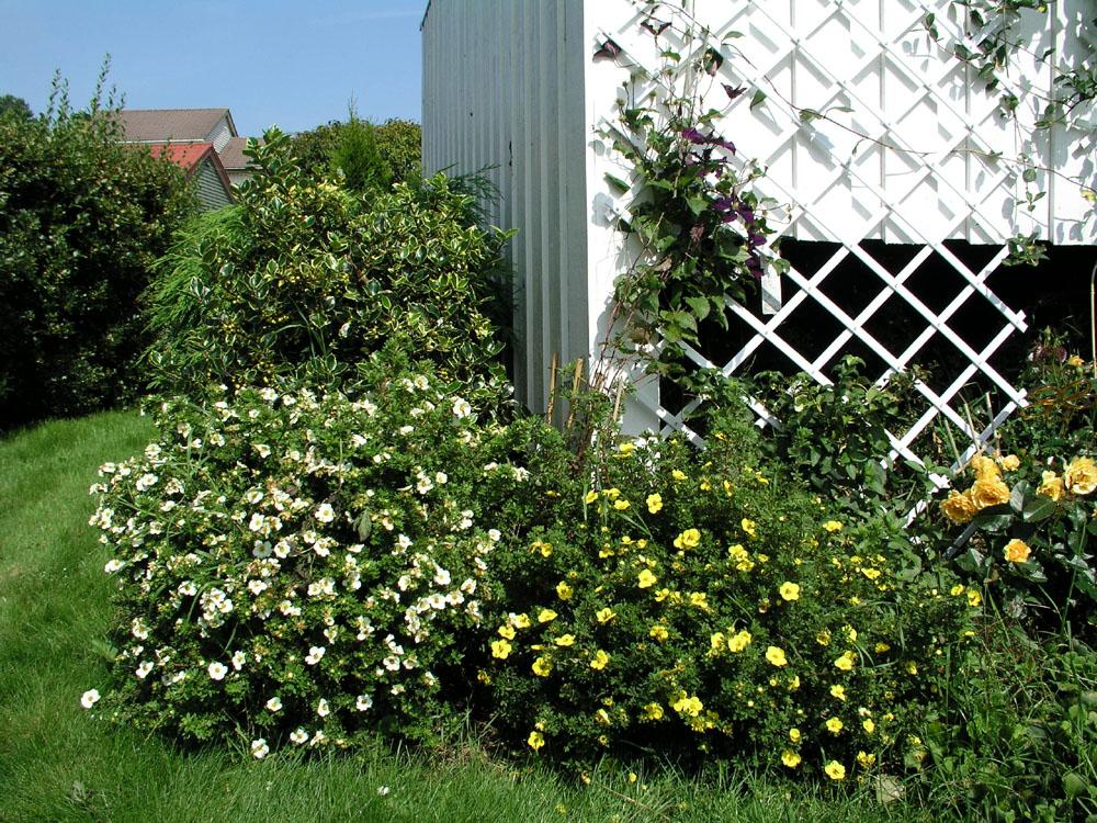 Busker i hagen