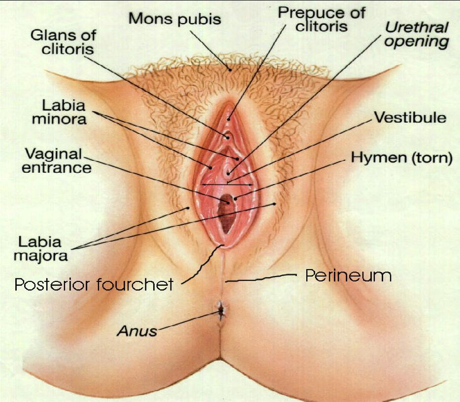 naken chat hvordan stimulere klitoris