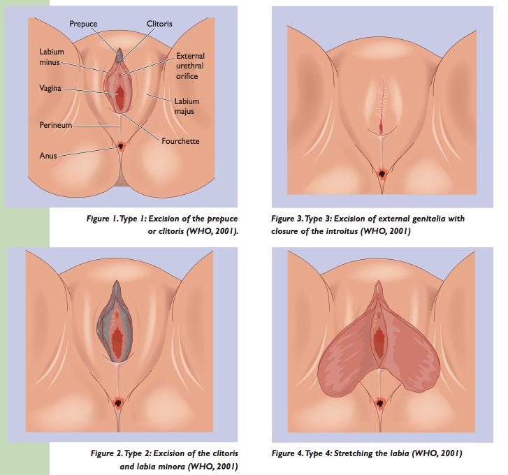 hva er klitoris Sauda