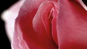 rosefitte